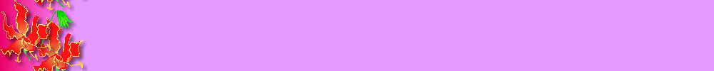 Border:Purple